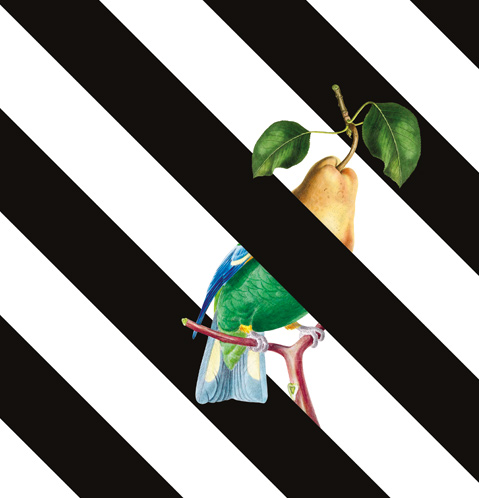 Half pear half bird on black and white striped background